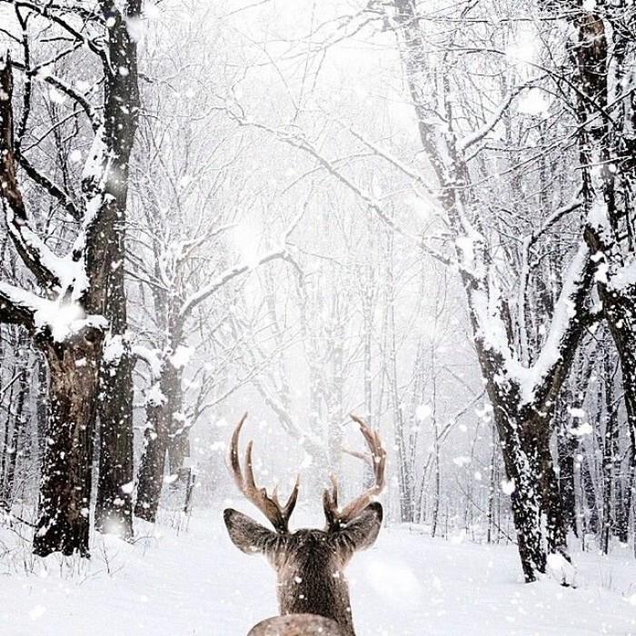 Bild-mit-Wintermotiven-Hirsch-im-Wald-Schnee.jpg