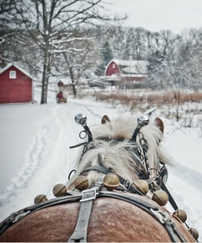 Fotos de inverno de inverno a cabalo montando pola neve'hiver Impressions à cheval par la neige