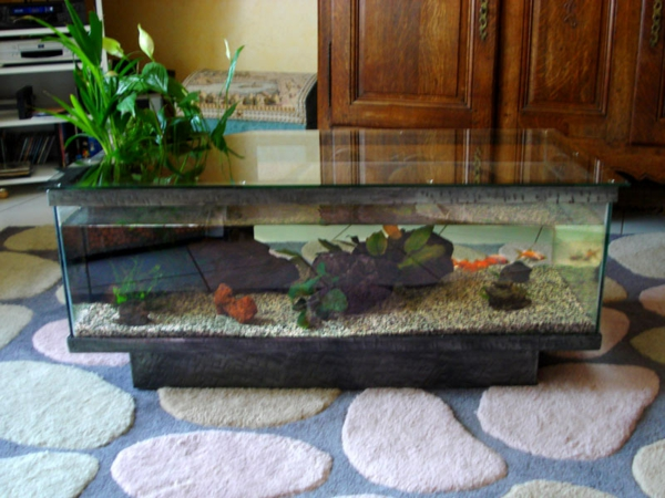 aquarium table-sur-tapis