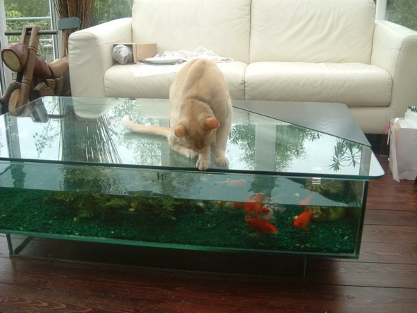 aquarium table poisson-chat