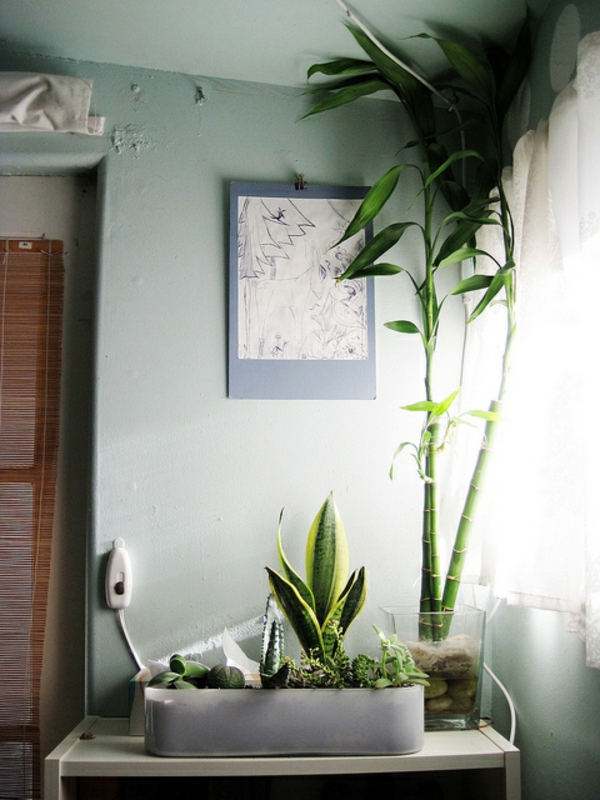 des plantes dans la chambre cela en vaut la peine coup s r. Black Bedroom Furniture Sets. Home Design Ideas