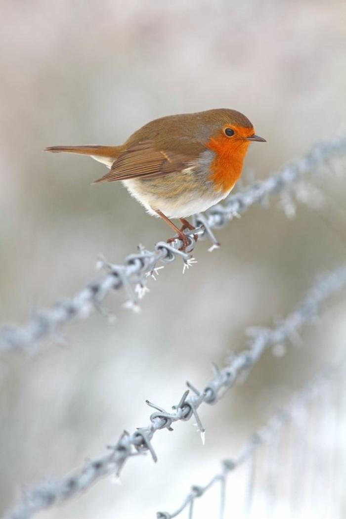 Hermosas fotos de inverno en The-la-barbedoon'hiver Oiseaux sur-la-barbelé