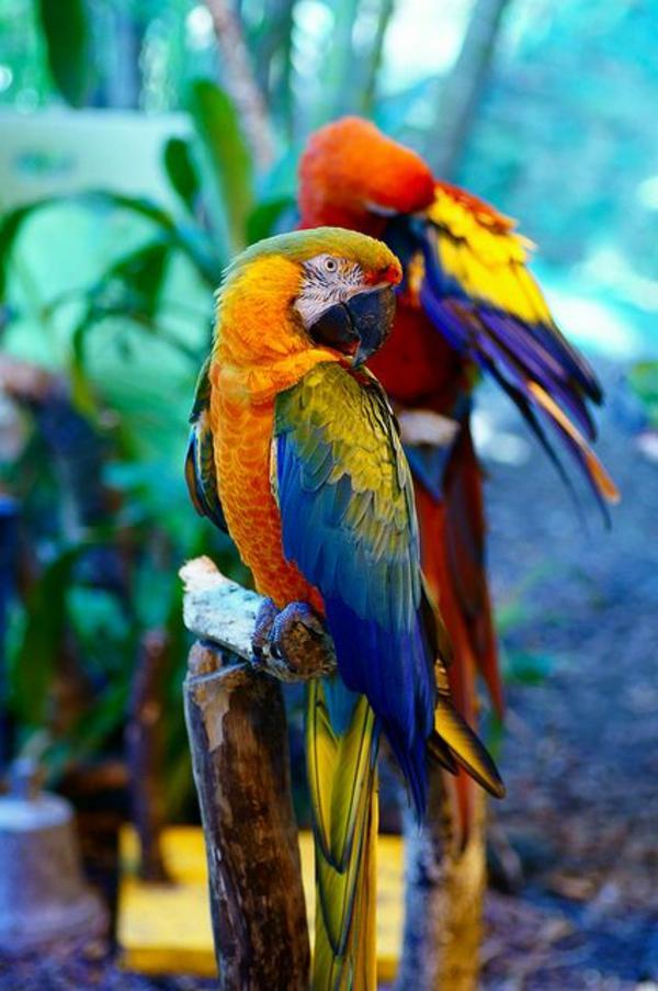 الببغاء الببغاء - صور فريدة من الطيور الملونة