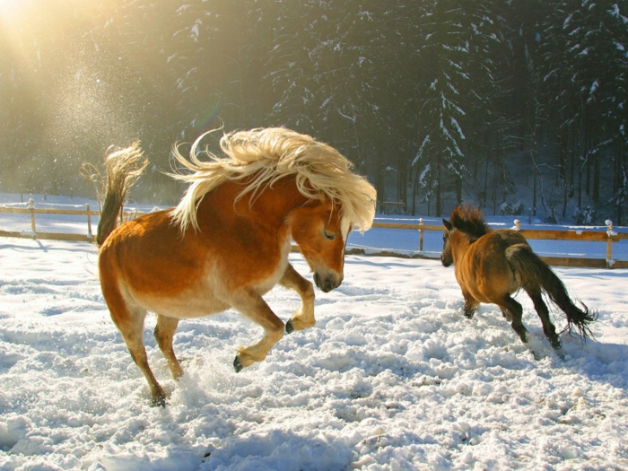 belle-image-cheval-on-the-neige